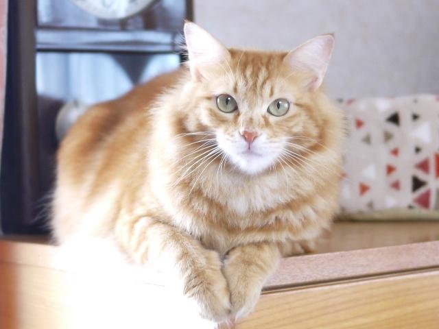 猫のお留守番 レオくん編。_a0143140_22493925.jpg