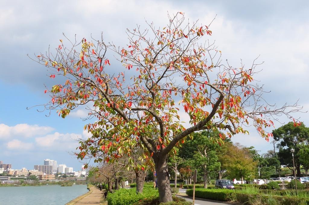 水戸の偕楽園公園で散策  その4 _b0236251_13052633.jpg