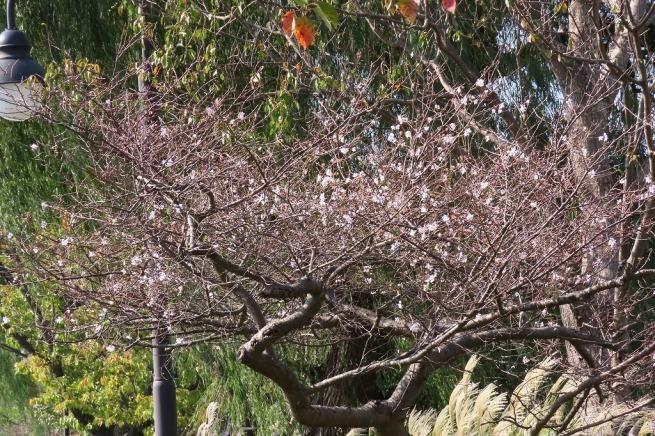 水戸の偕楽園公園で散策  その4 _b0236251_13253395.jpg