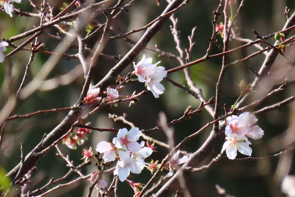 水戸の偕楽園公園で散策  その4 _b0236251_13254406.jpg