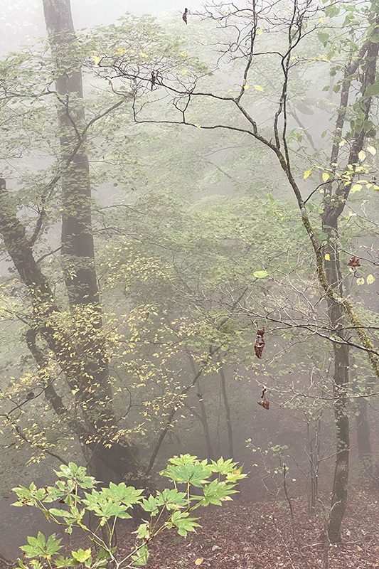 38年ぶりの三頭山 2021年10月16日_d0123571_23000670.jpg