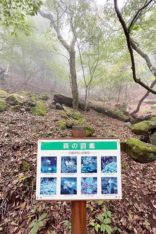 38年ぶりの三頭山 2021年10月16日_d0123571_23002266.jpg
