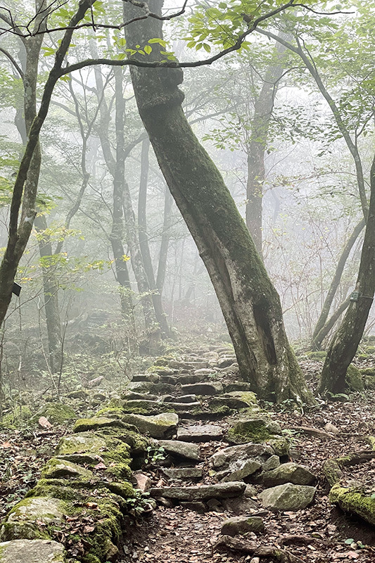 38年ぶりの三頭山 2021年10月16日_d0123571_23003818.jpg