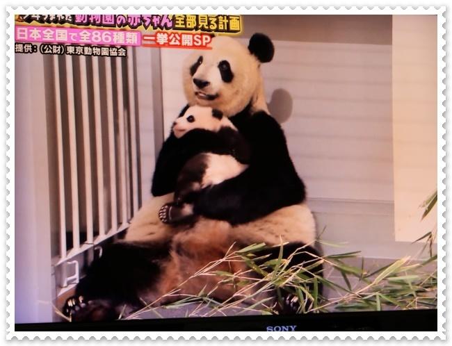 可愛い動物の赤ちゃん達Ⅱ!(^^)!_b0364186_21453421.jpg