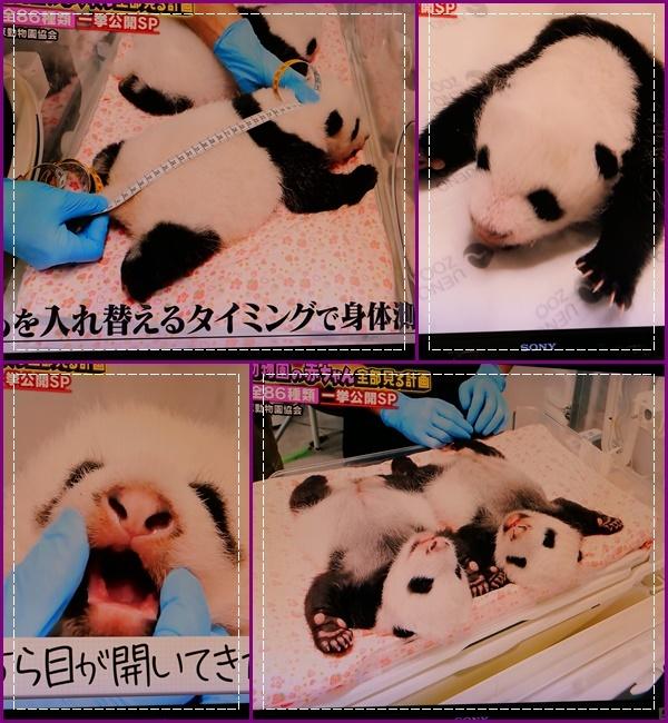 可愛い動物の赤ちゃん達Ⅱ!(^^)!_b0364186_21472023.jpg