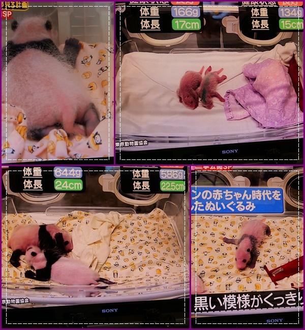 可愛い動物の赤ちゃん達Ⅱ!(^^)!_b0364186_21481162.jpg