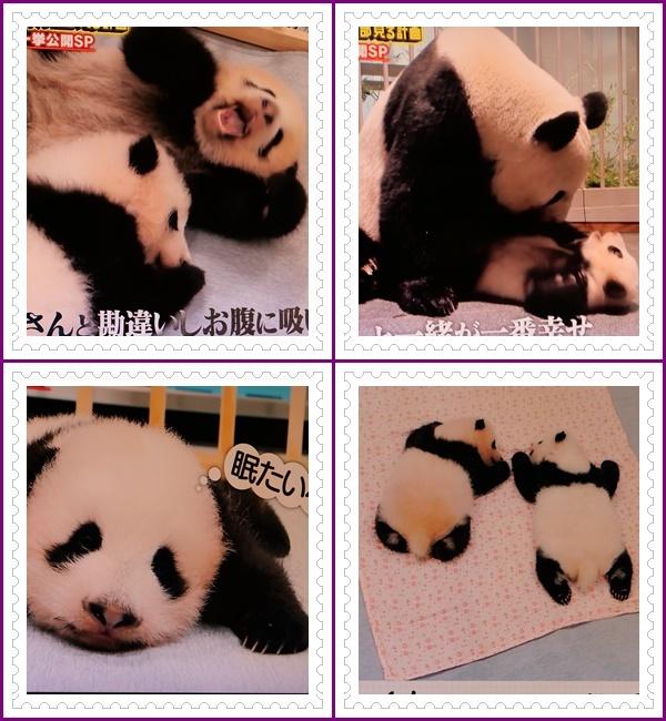 可愛い動物の赤ちゃん達Ⅱ!(^^)!_b0364186_21515401.jpg