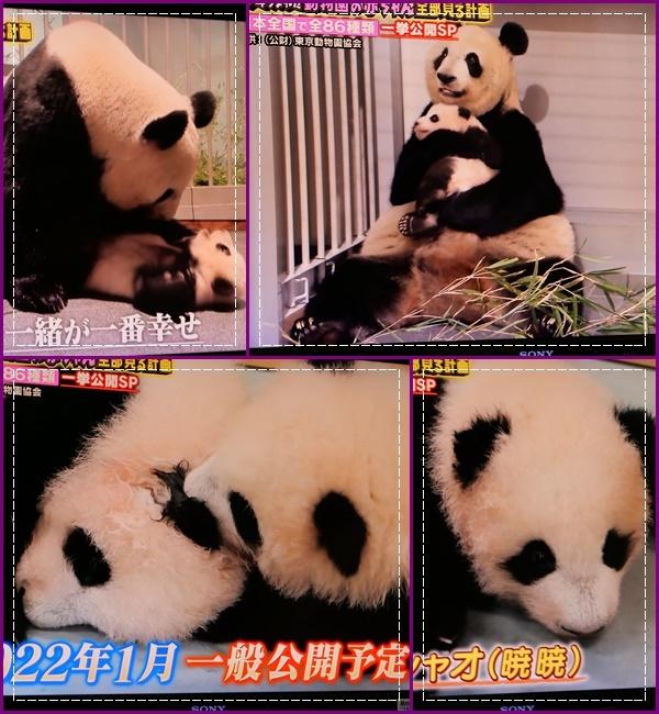 可愛い動物の赤ちゃん達Ⅱ!(^^)!_b0364186_21521079.jpg
