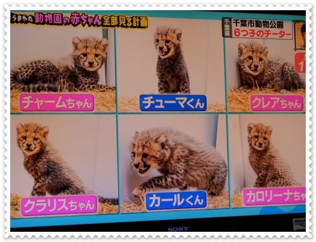 可愛い動物の赤ちゃん達Ⅱ!(^^)!_b0364186_21560046.jpg