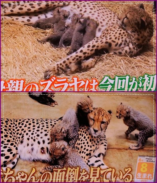 可愛い動物の赤ちゃん達Ⅱ!(^^)!_b0364186_21575814.jpg
