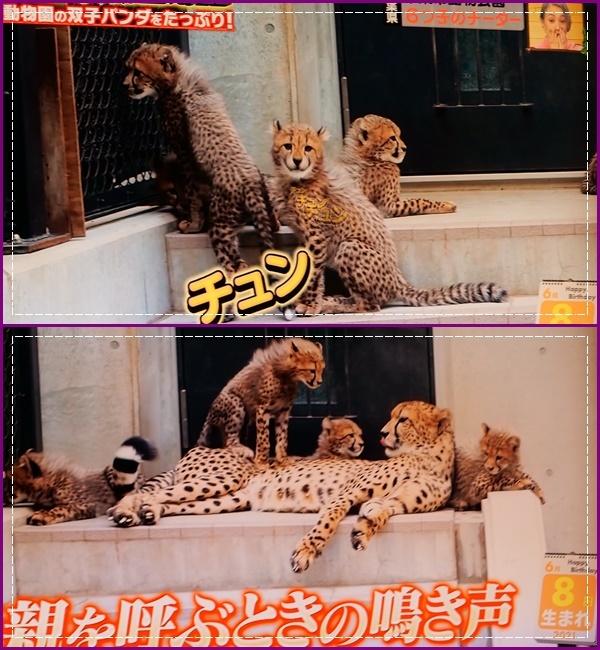 可愛い動物の赤ちゃん達Ⅱ!(^^)!_b0364186_21583167.jpg