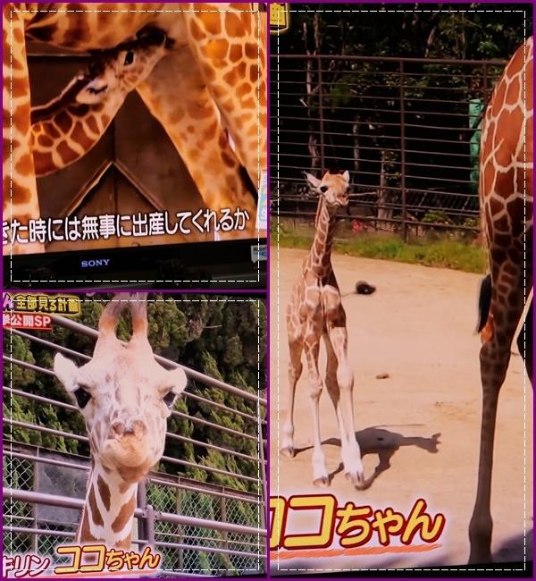 可愛い動物の赤ちゃん達Ⅱ!(^^)!_b0364186_22001067.jpg