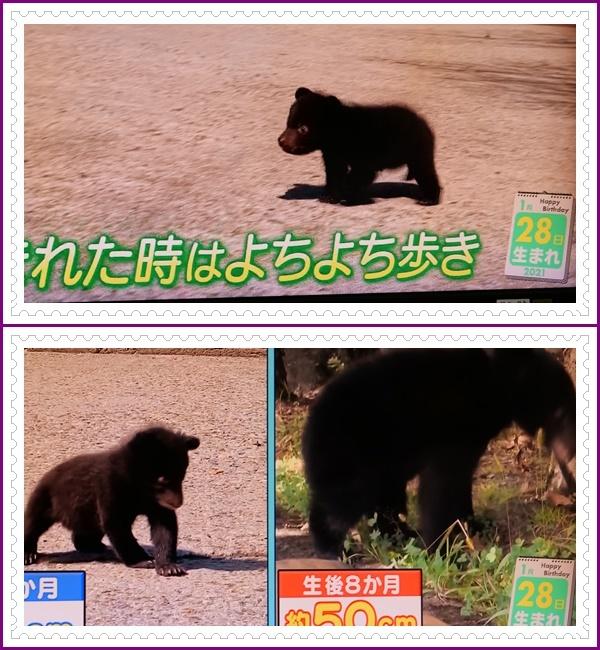 可愛い動物の赤ちゃん達Ⅱ!(^^)!_b0364186_22035562.jpg