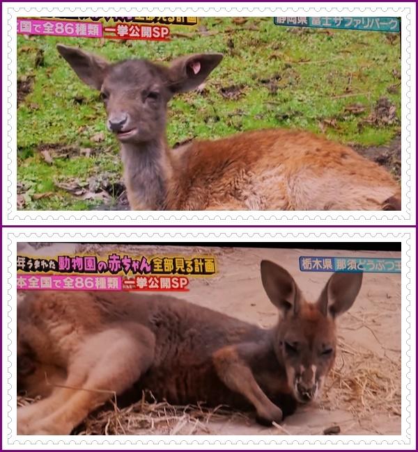 可愛い動物の赤ちゃん達Ⅱ!(^^)!_b0364186_22052794.jpg