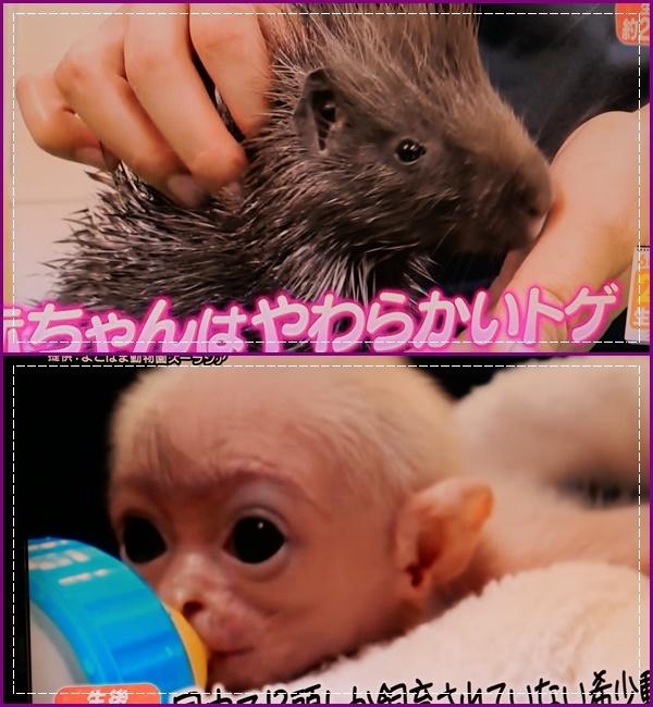 可愛い動物の赤ちゃん達Ⅱ!(^^)!_b0364186_22102417.jpg