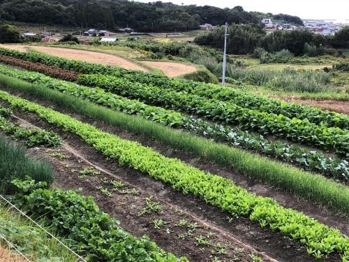 山から見る 大好きな野菜畑_a0346704_17445016.jpg