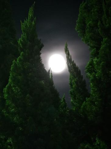 Moon among the green_f0006713_07462676.jpg