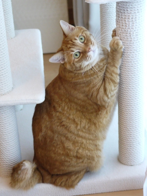 猫のお留守番 きなこくん編。_a0143140_22542401.jpg