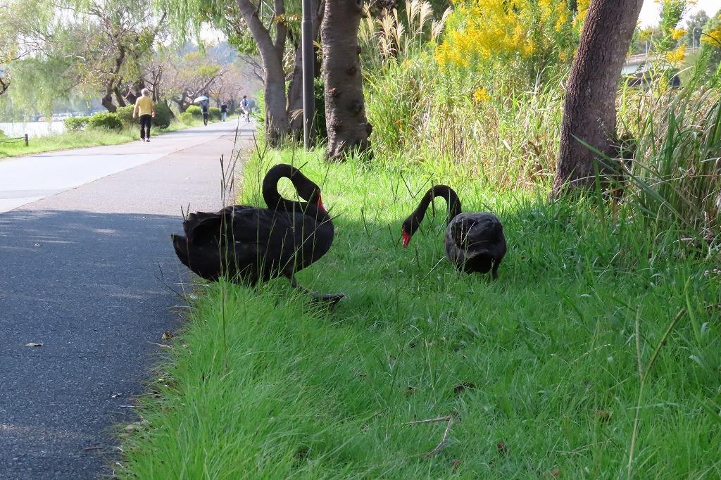 水戸の偕楽園公園で散策  最終回です_b0236251_17415003.jpg