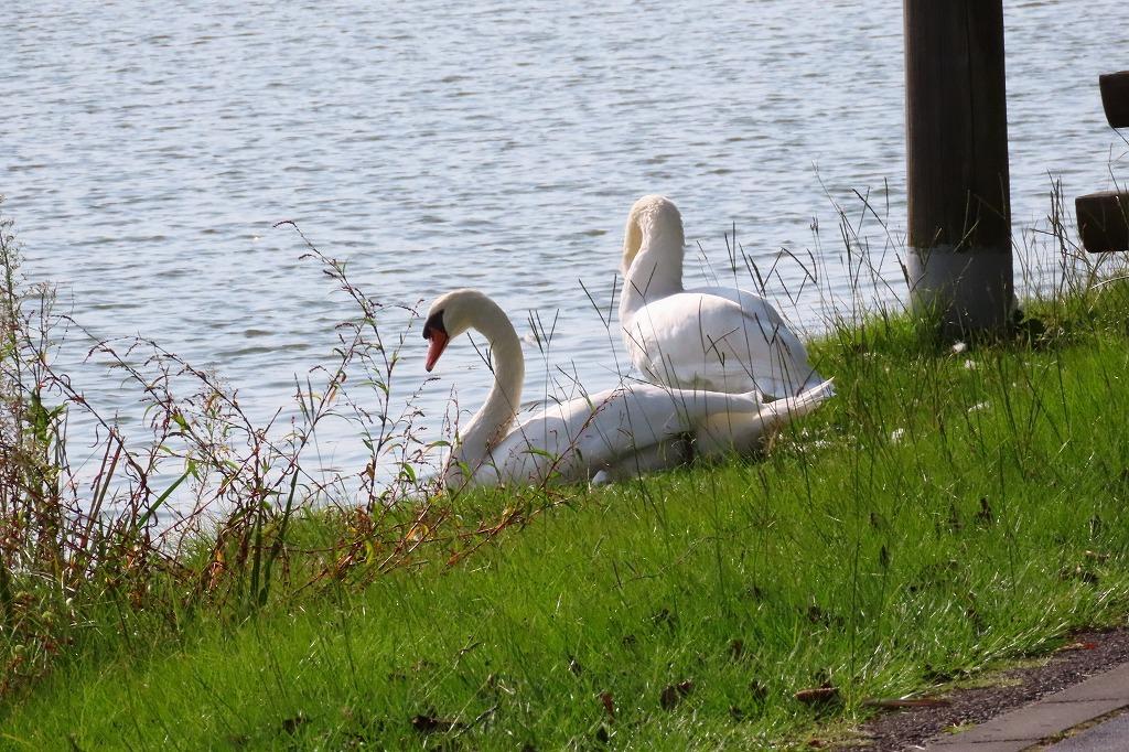 水戸の偕楽園公園で散策  最終回です_b0236251_17462184.jpg