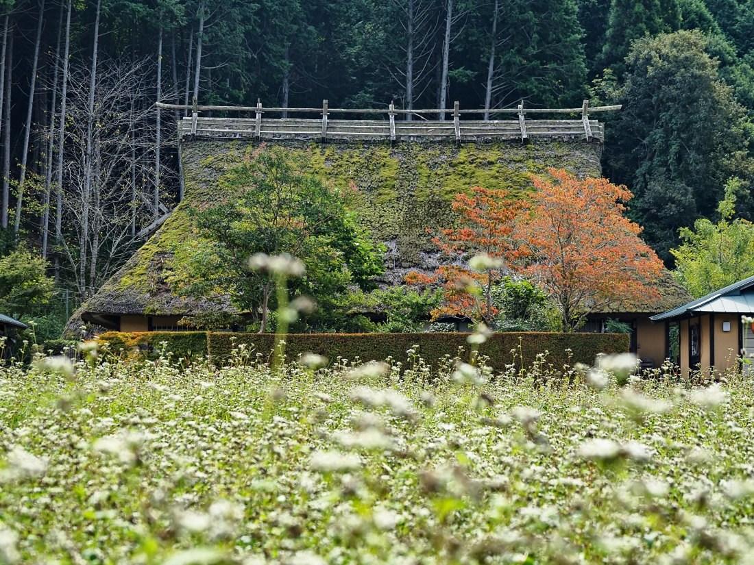 蕎麦4   京都府_d0286954_18002011.jpg