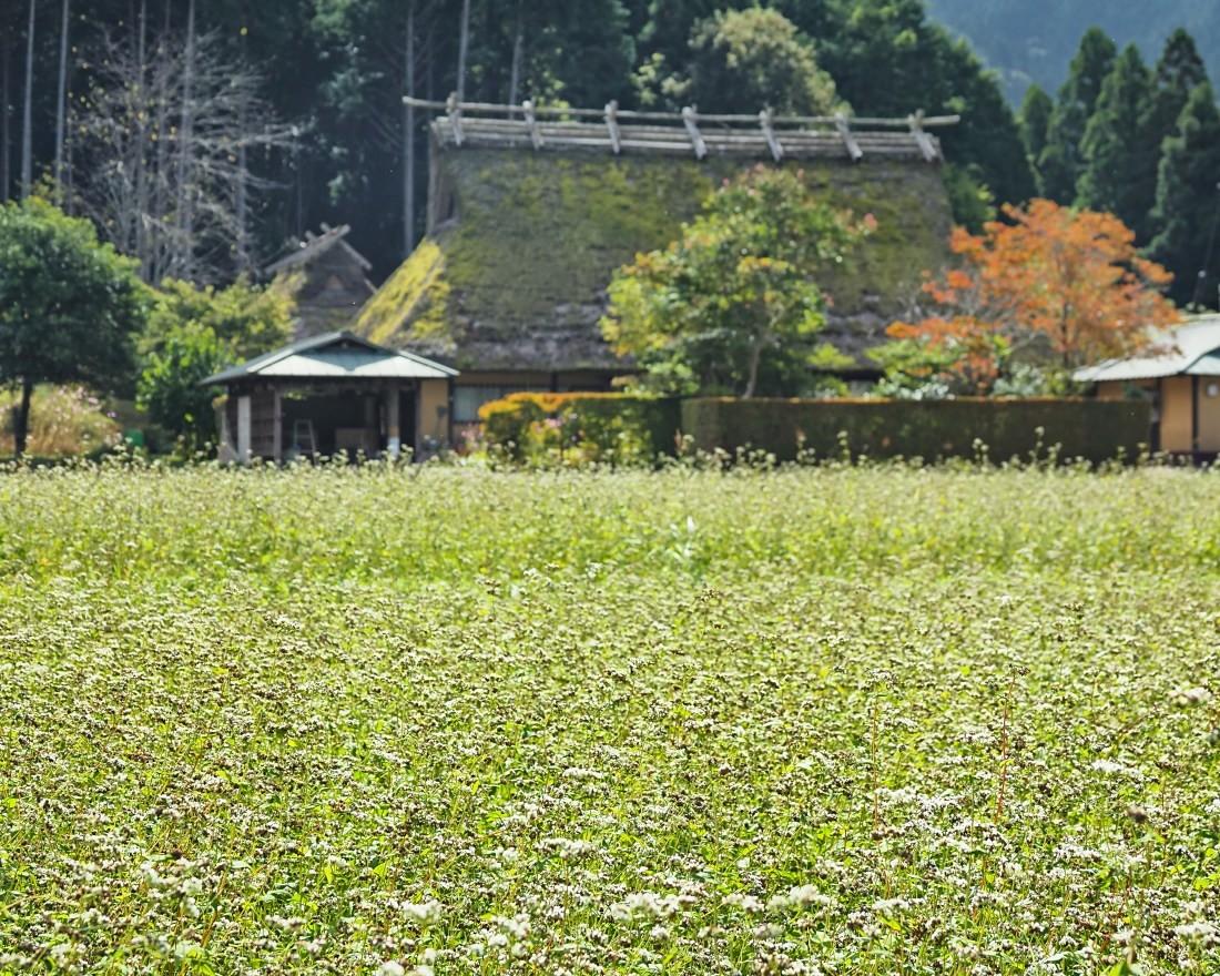 蕎麦4   京都府_d0286954_18002535.jpg