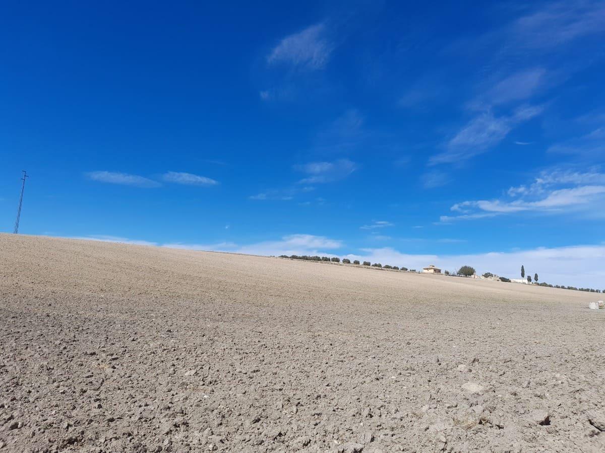 野生動物も住み着いているスペインの畑事情_e0061699_06195605.jpg