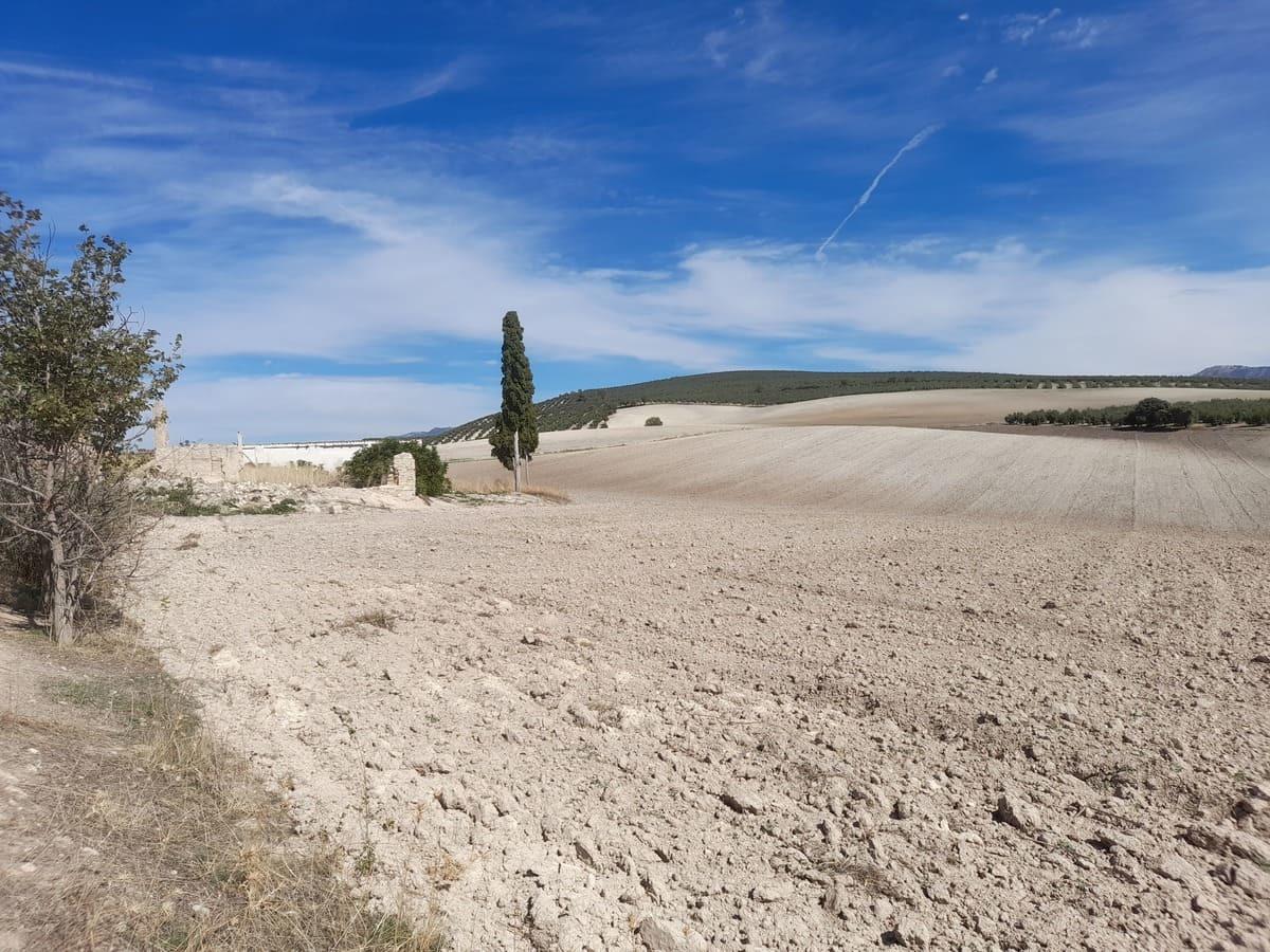 野生動物も住み着いているスペインの畑事情_e0061699_06195734.jpg
