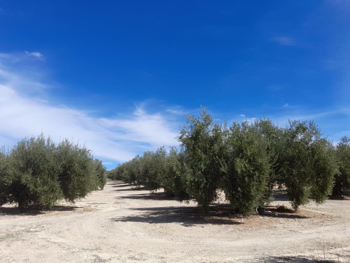 野生動物も住み着いているスペインの畑事情_e0061699_06195766.jpg