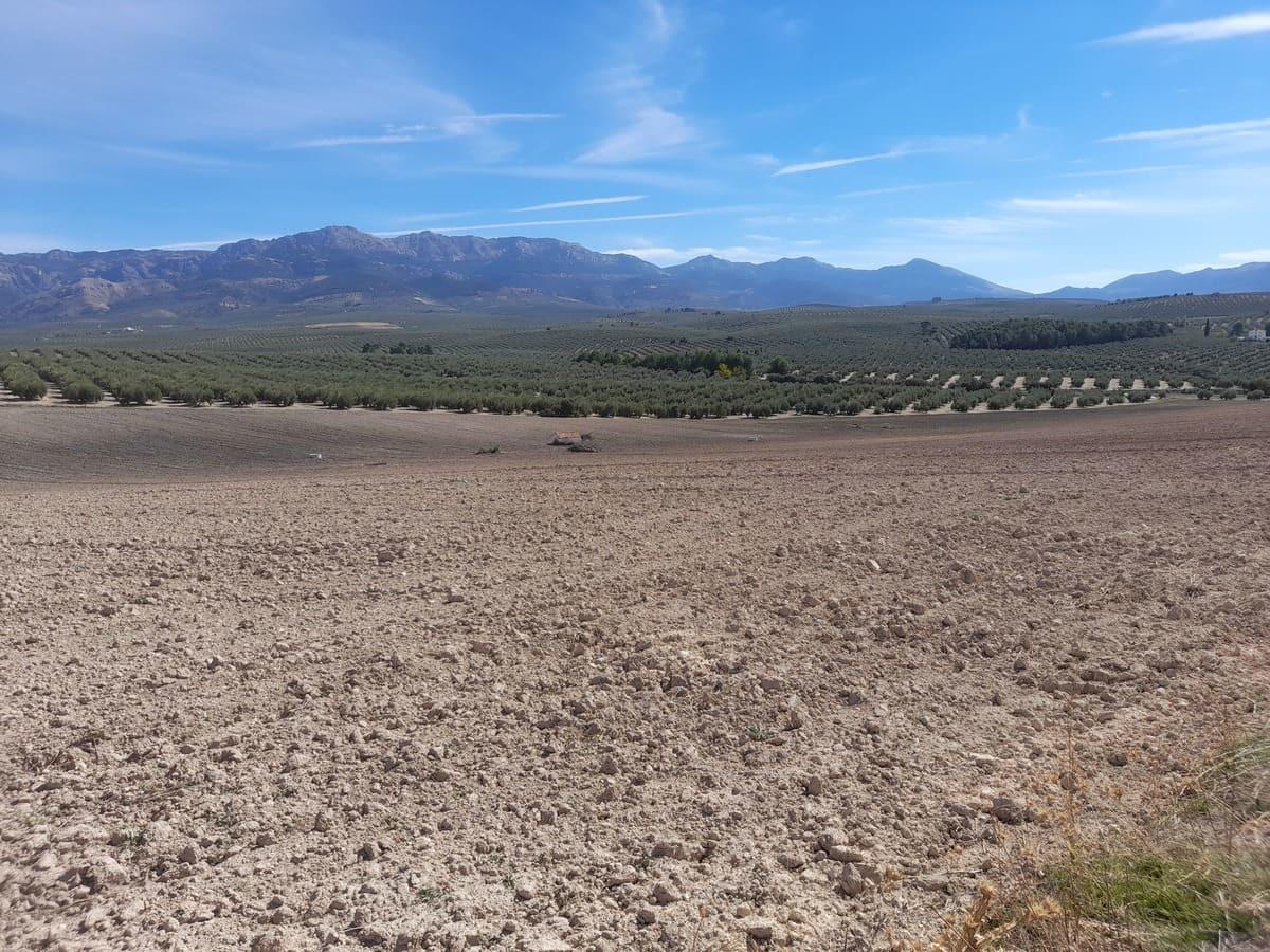 野生動物も住み着いているスペインの畑事情_e0061699_06195780.jpg