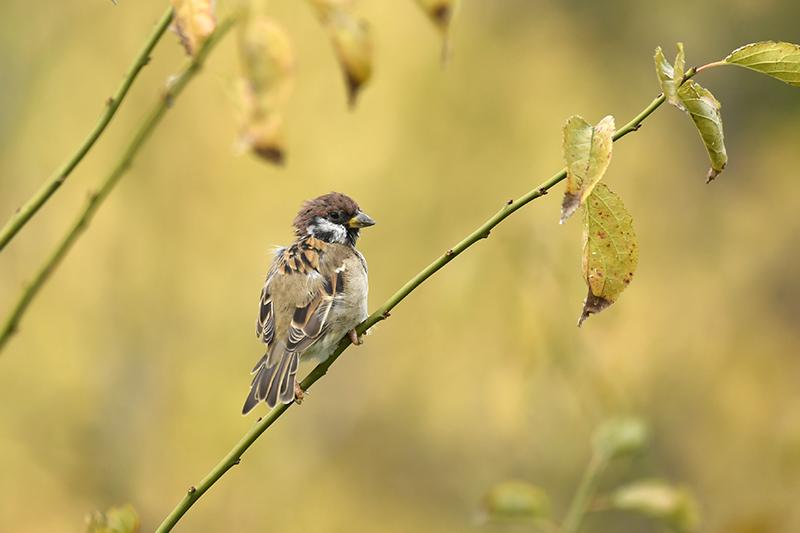 秋の梅林で_d0137936_16465216.jpg