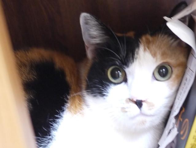 猫のお留守番 いちごちゃん編。_a0143140_19134582.jpg