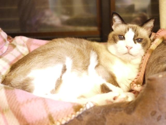 猫のお留守番 もんさんちゃん編。_a0143140_19163751.jpg