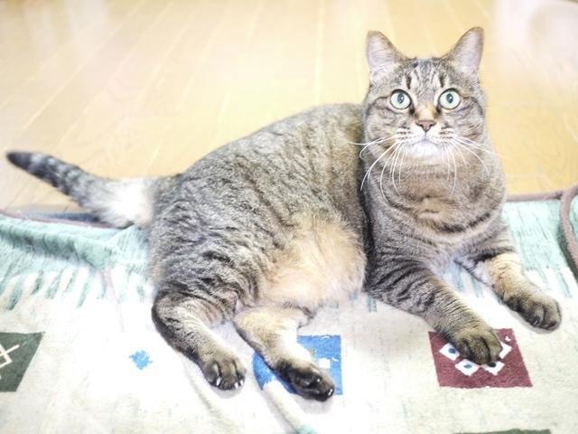 猫のお留守番 savaちゃん編。_a0143140_19192113.jpg
