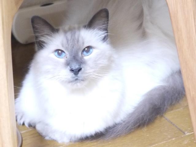 猫のお留守番 たまくん編。_a0143140_19211986.jpg