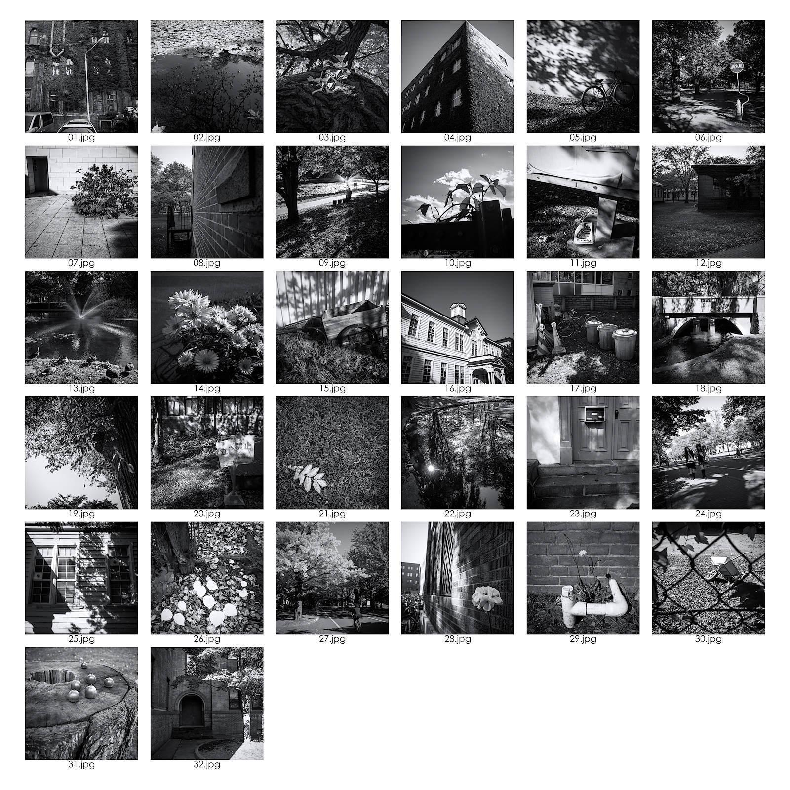 北大キャンパスの秋 - Part.1 -_e0341968_15314372.jpg