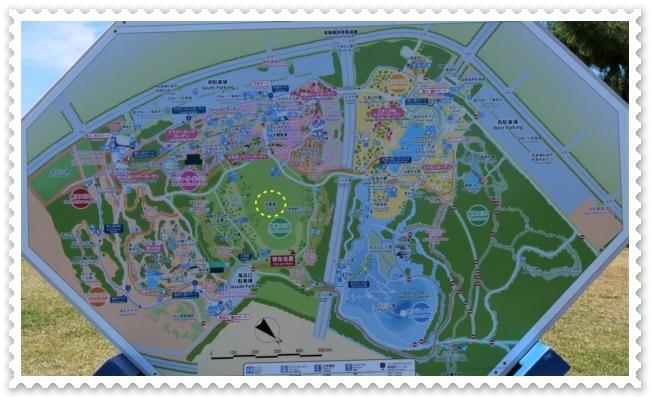 『ひたち海浜公園』のコキア①!(^^)!_b0364186_22292699.jpg