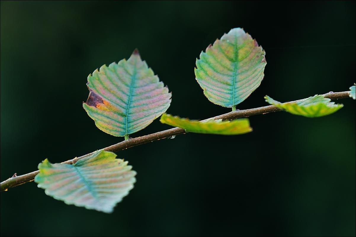 *秋の葉_d0129998_23320741.jpg