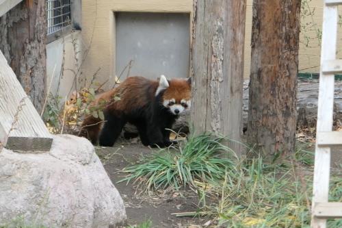 旭川旅行1日目後半:旭山動物園〜ホテル_f0369014_18410311.jpeg
