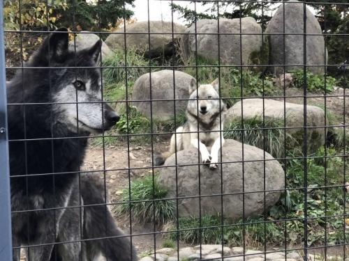 旭川旅行1日目後半:旭山動物園〜ホテル_f0369014_18572740.jpeg