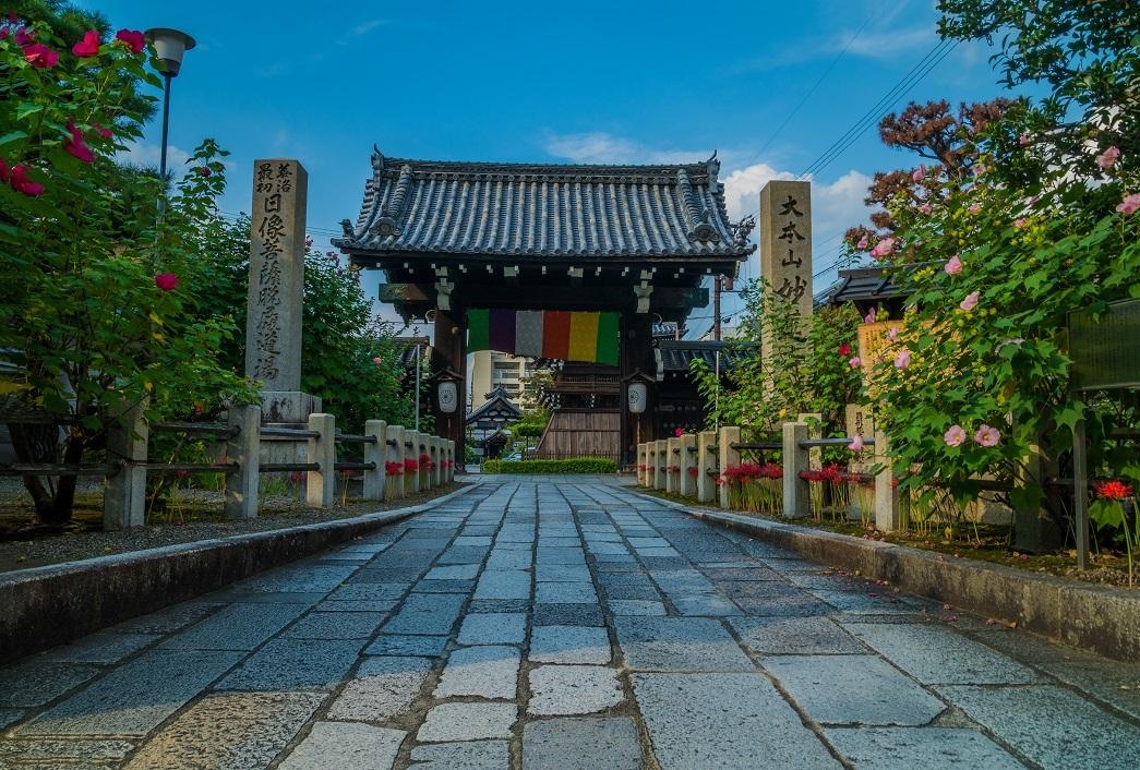 妙蓮寺に咲く秋の花_e0363038_10181989.jpg