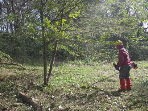 同期のサクラと実生モミジの苗木移植10・21六国見山手入れ_c0014967_14255322.jpg