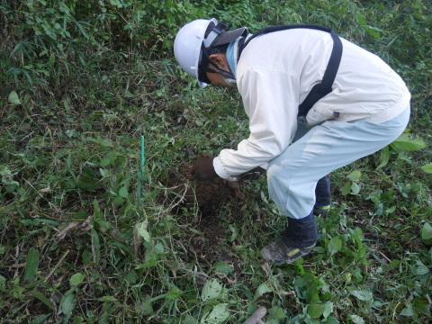 同期のサクラと実生モミジの苗木移植10・21六国見山手入れ_c0014967_14314550.jpg
