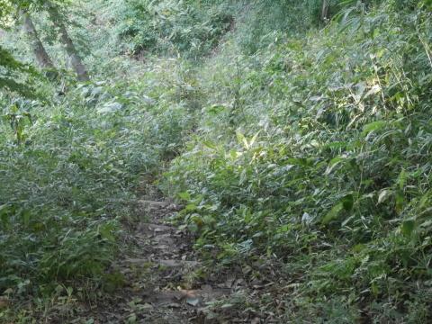 同期のサクラと実生モミジの苗木移植10・21六国見山手入れ_c0014967_14394068.jpg