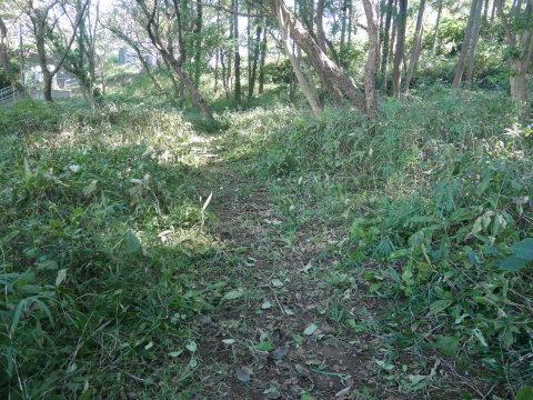 同期のサクラと実生モミジの苗木移植10・21六国見山手入れ_c0014967_14420353.jpg