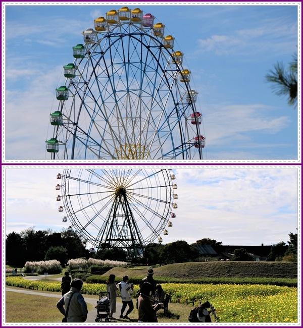 「コキア」から「大草原」へ移動②!(^^)!_b0364186_22141854.jpg