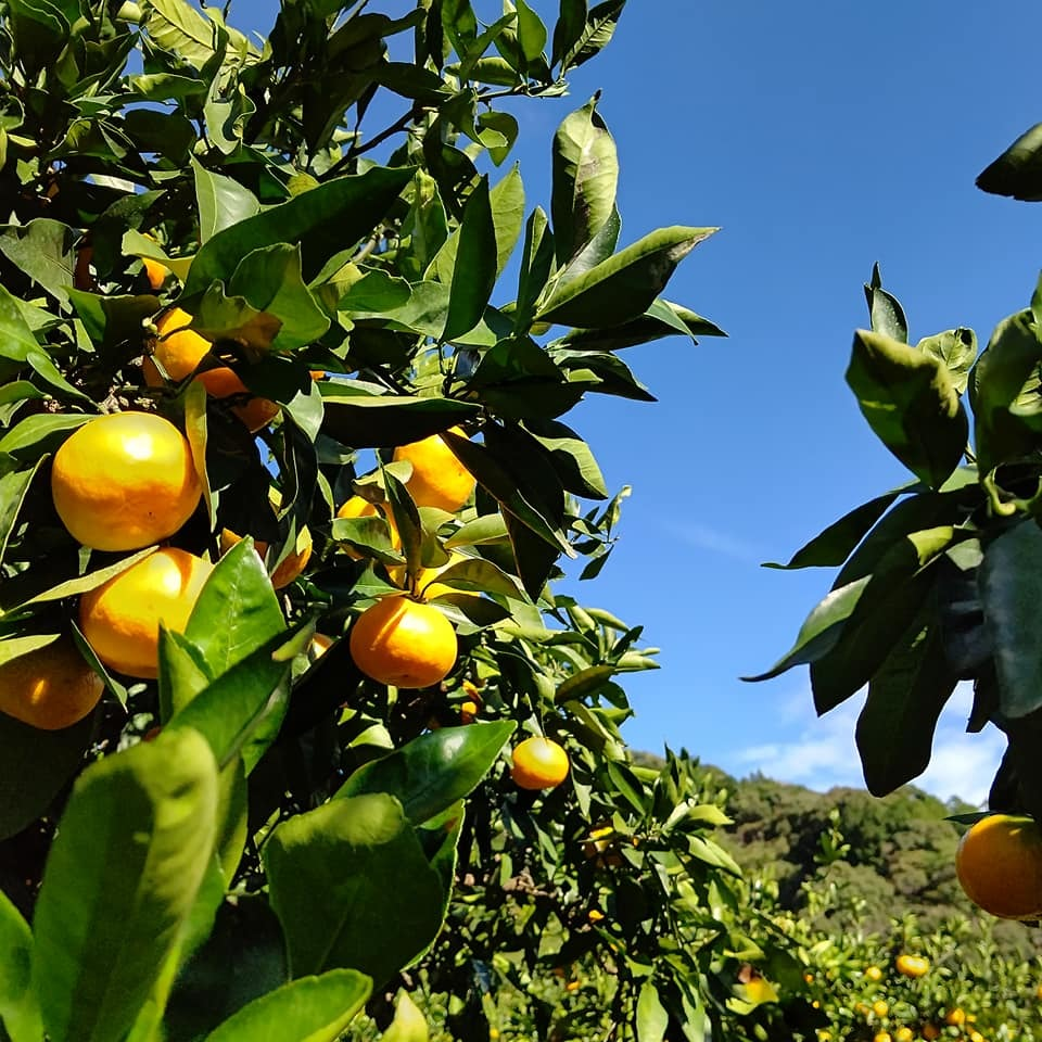 10月24日の農園カフェ~ランチは予約で完売しました_b0028299_19011665.jpg