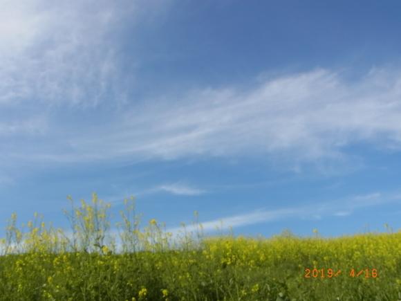 春の堤防_b0002879_16270675.jpg