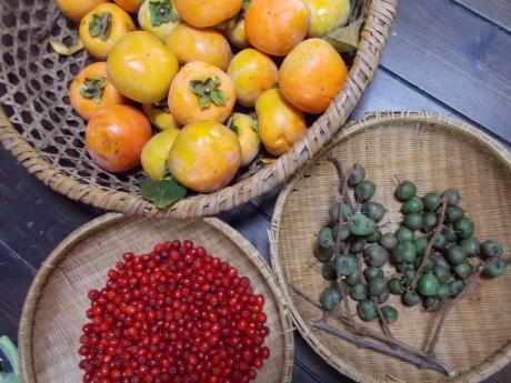 白南天の目覚め・今日も柿をもぐ_a0203003_15304251.jpg