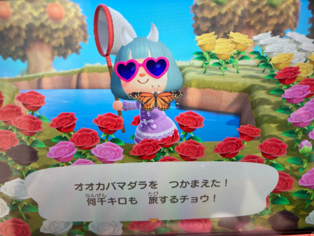 旅する蝶_e0048035_22153639.jpg